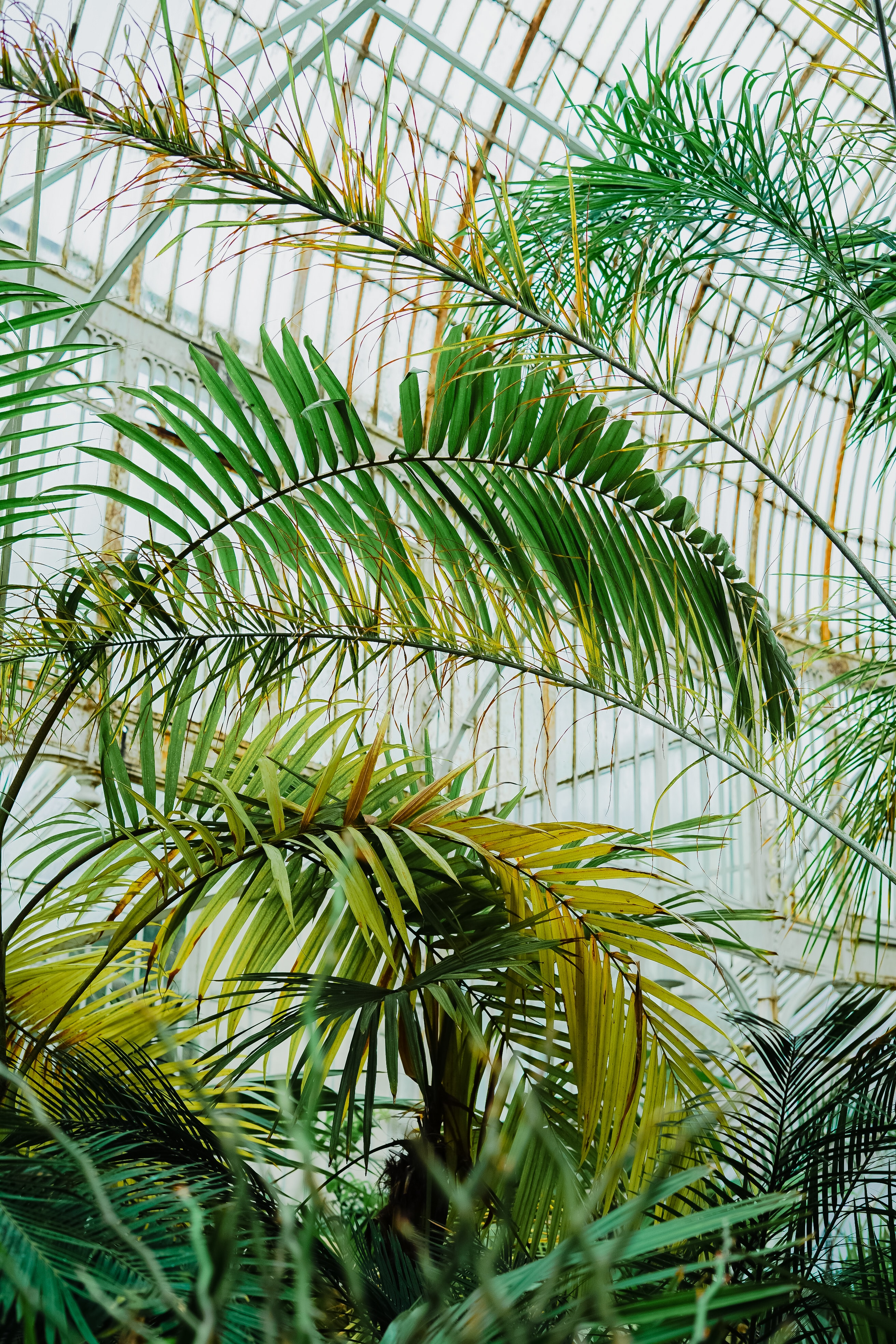 photo of green palm plant