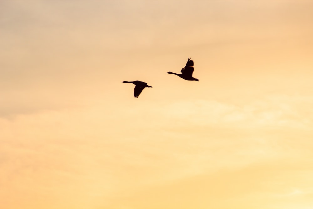 two flying birds