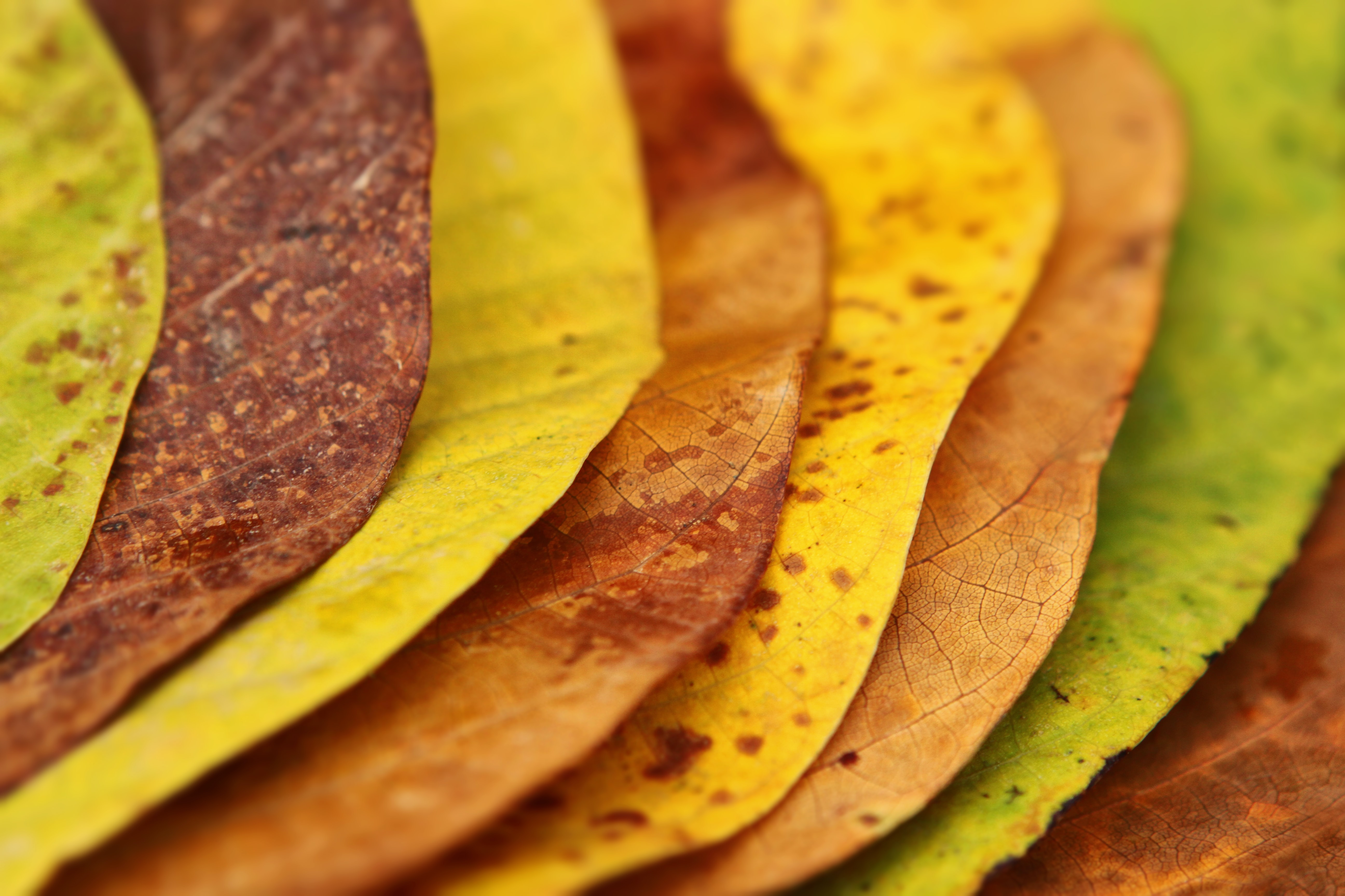 close-up photography of assorted-color leaves