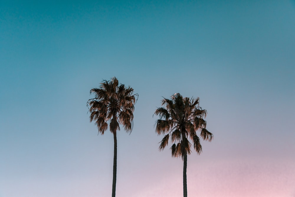 two green palm trees