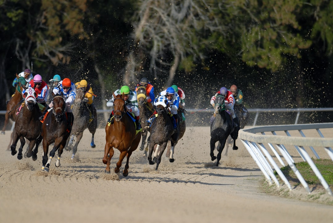 shallow focus photography of horse race