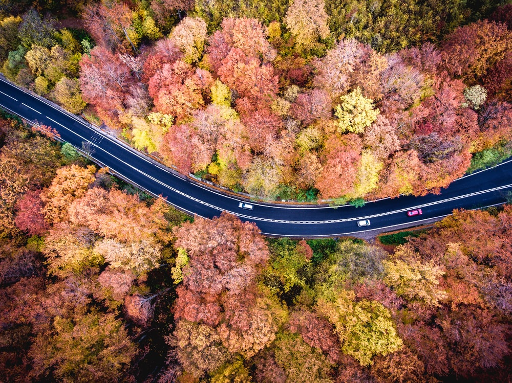 aerial photography of road between red and yellow trees