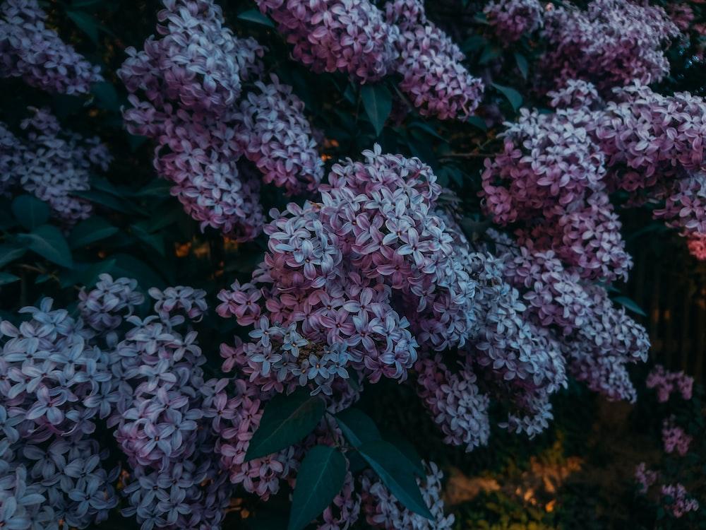 purple flowering plant