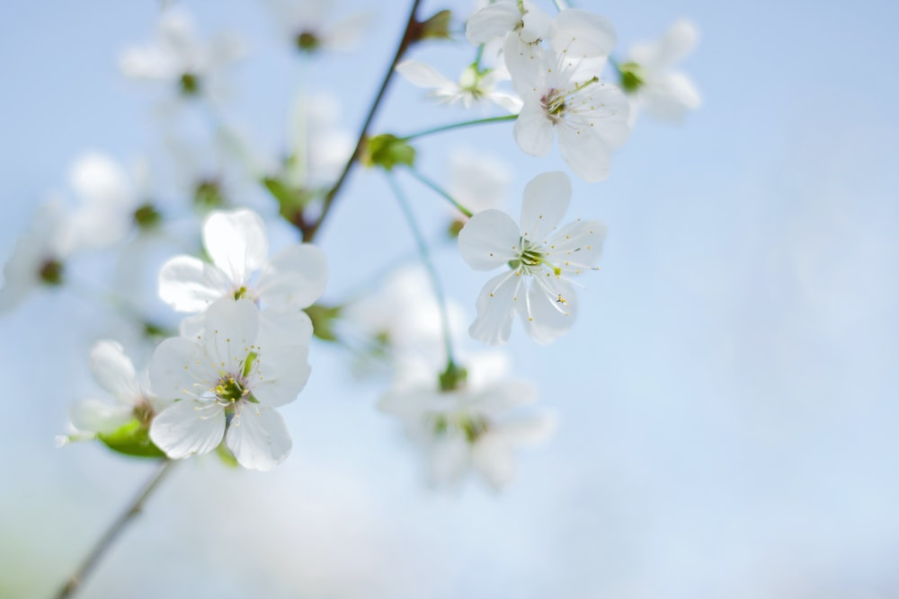 shallow focus photography of white petaled flowers