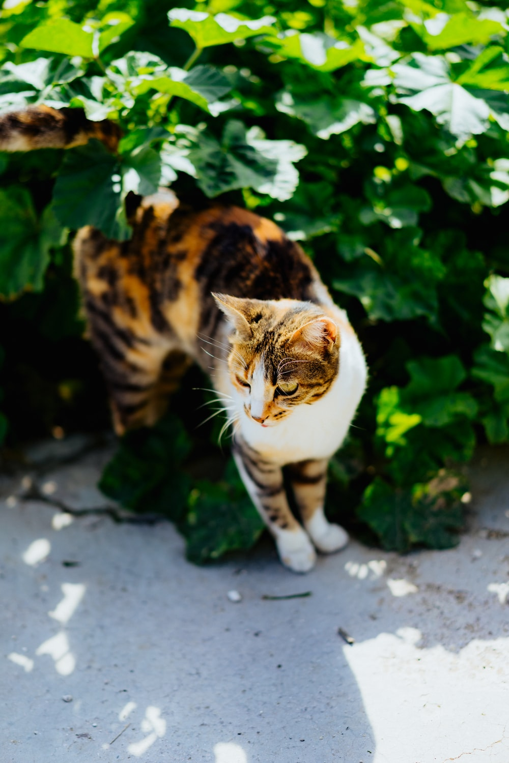 selective focus photography of brown and white cat beside green leaf plant