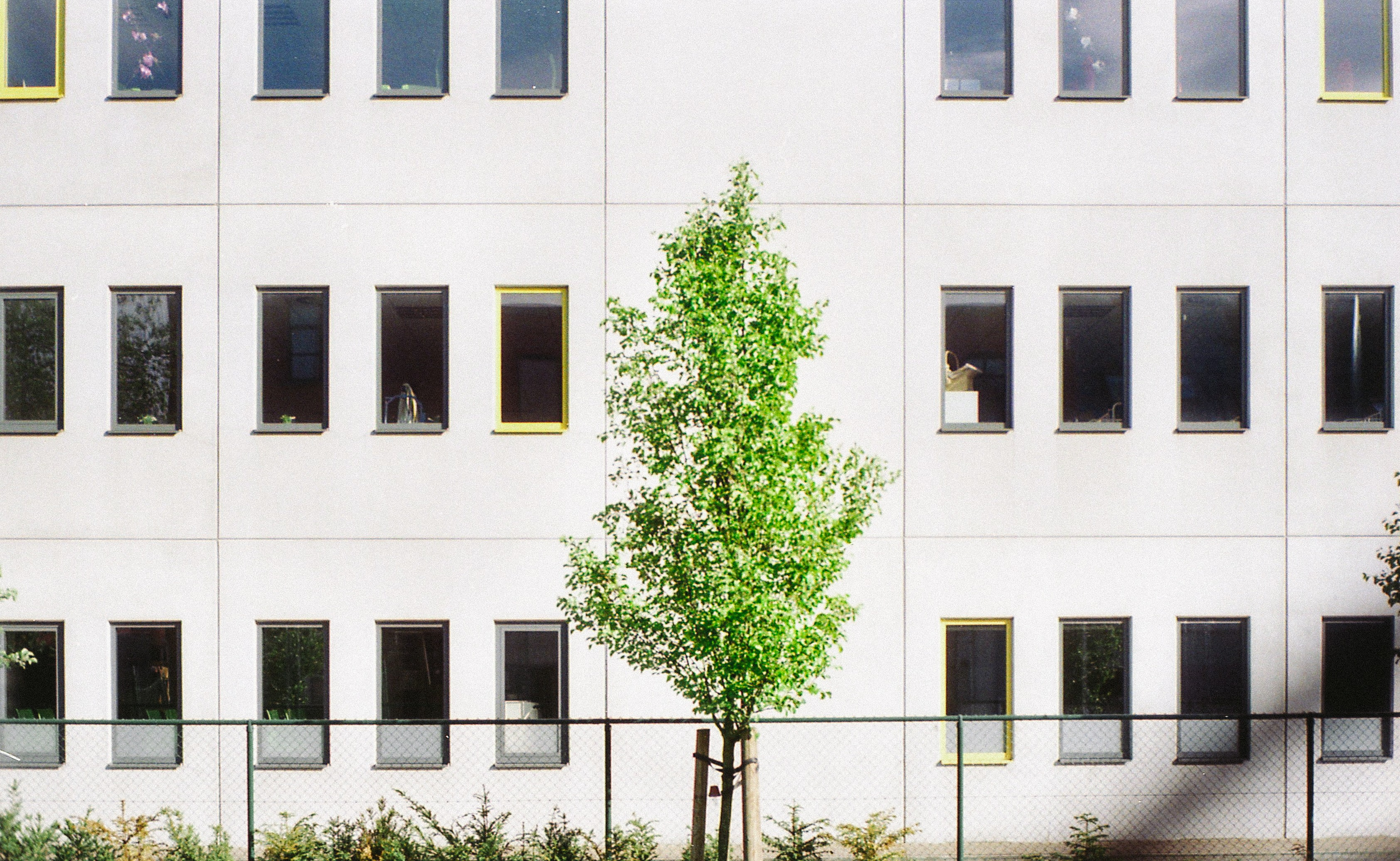 green leafed tree beside gray concrete building