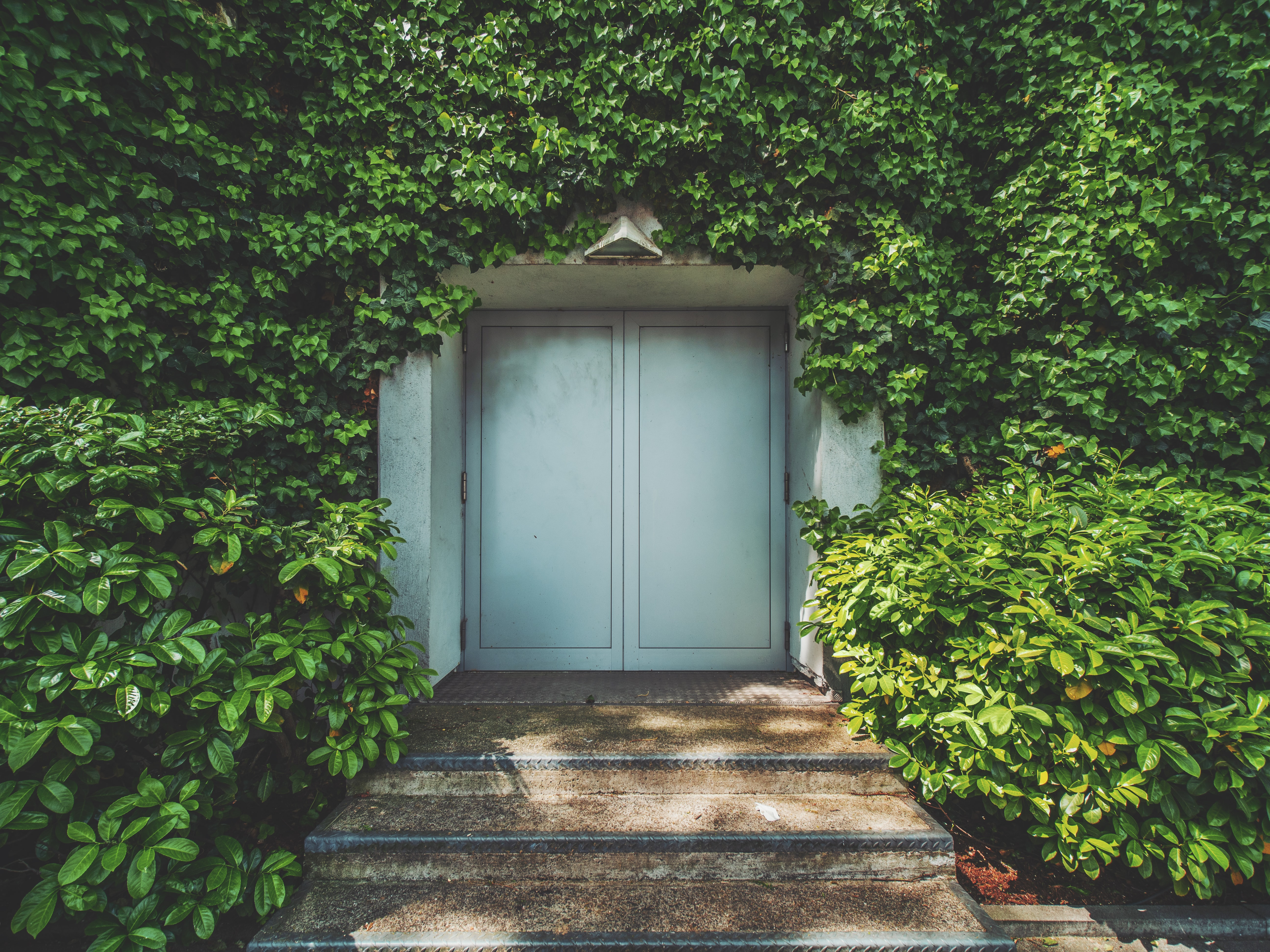 white wooden door surrounded by plants