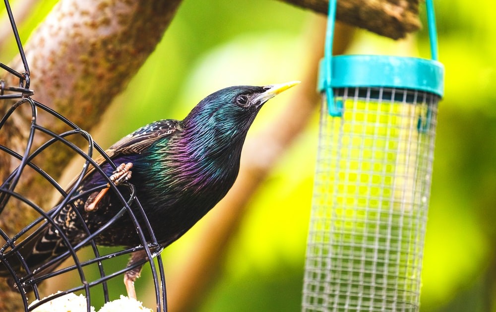 black bird near gray wire bird feeder