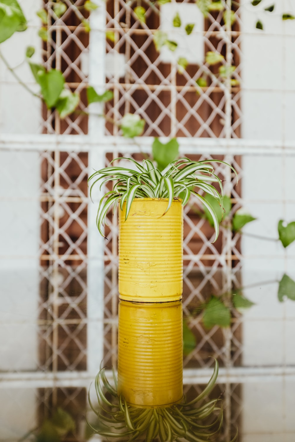 green spider plant in yellow can