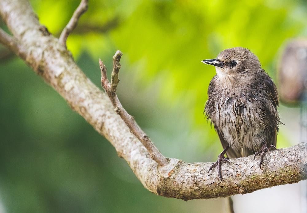 brown bird sitting on stick