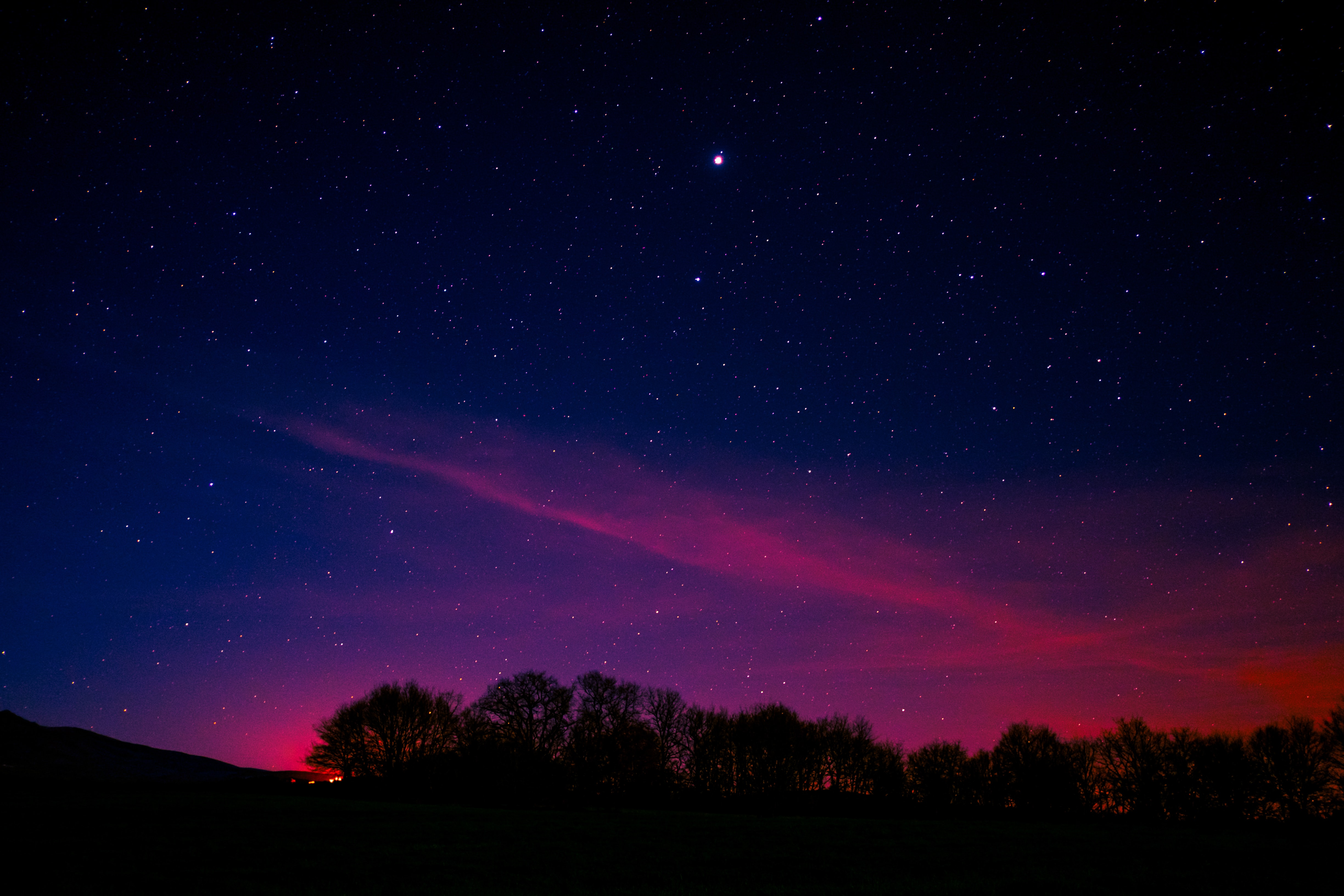 silhouette of tree with pink clouds under starry night