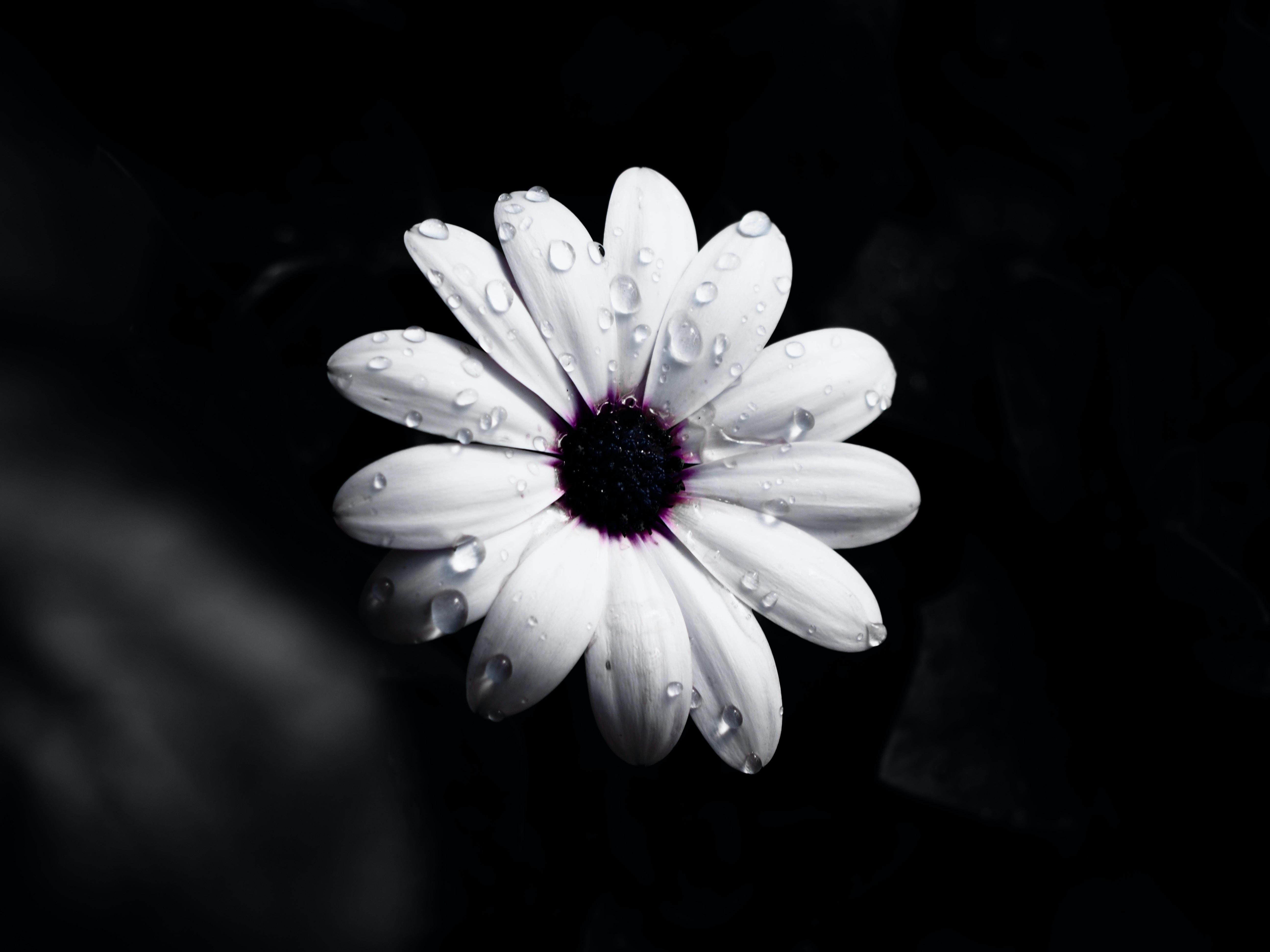 photo of white daisy flower