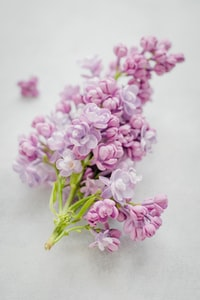 pink cluster petaled flower on gray surface