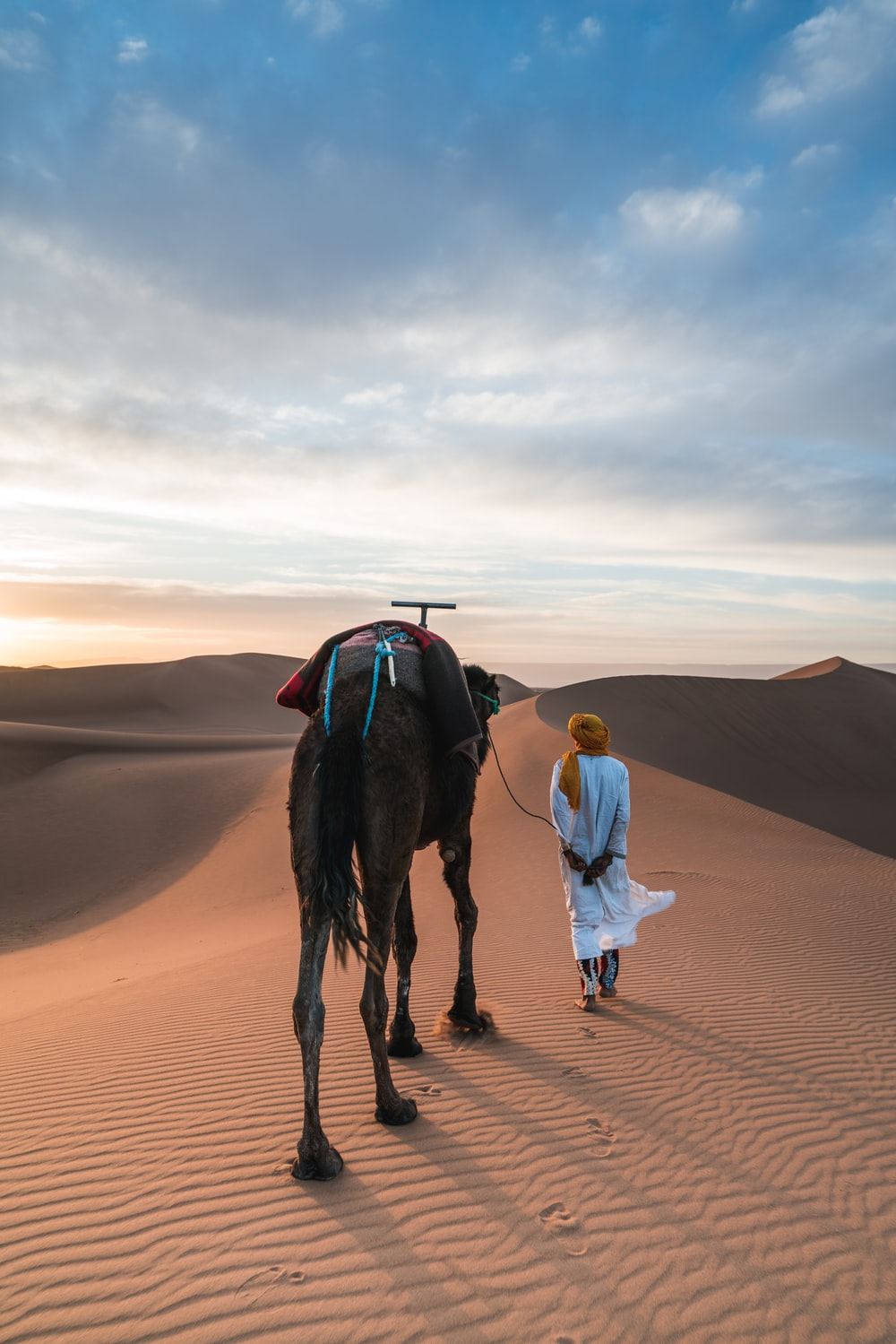 man walking with his camel