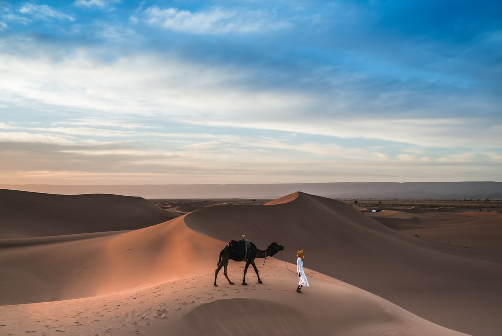 man walking with camel on desert