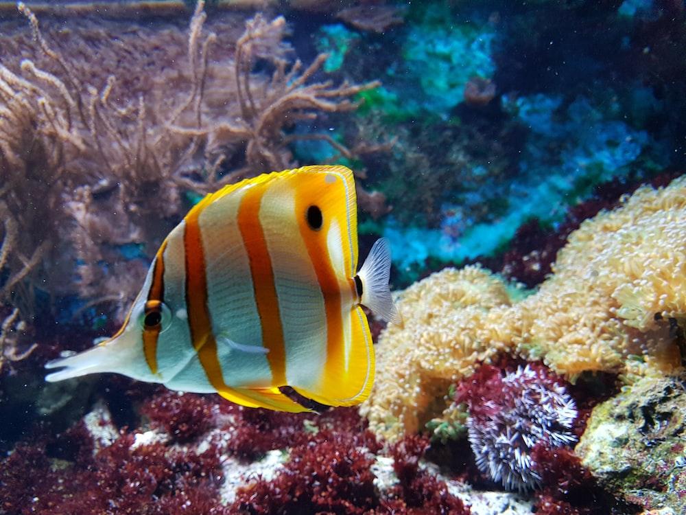 yellow and white fish underwater photography