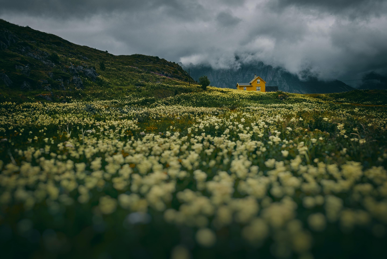 white flower fields under cloudy sky
