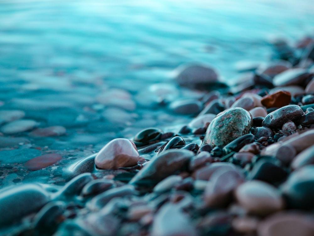 brown and black stones at the seashore