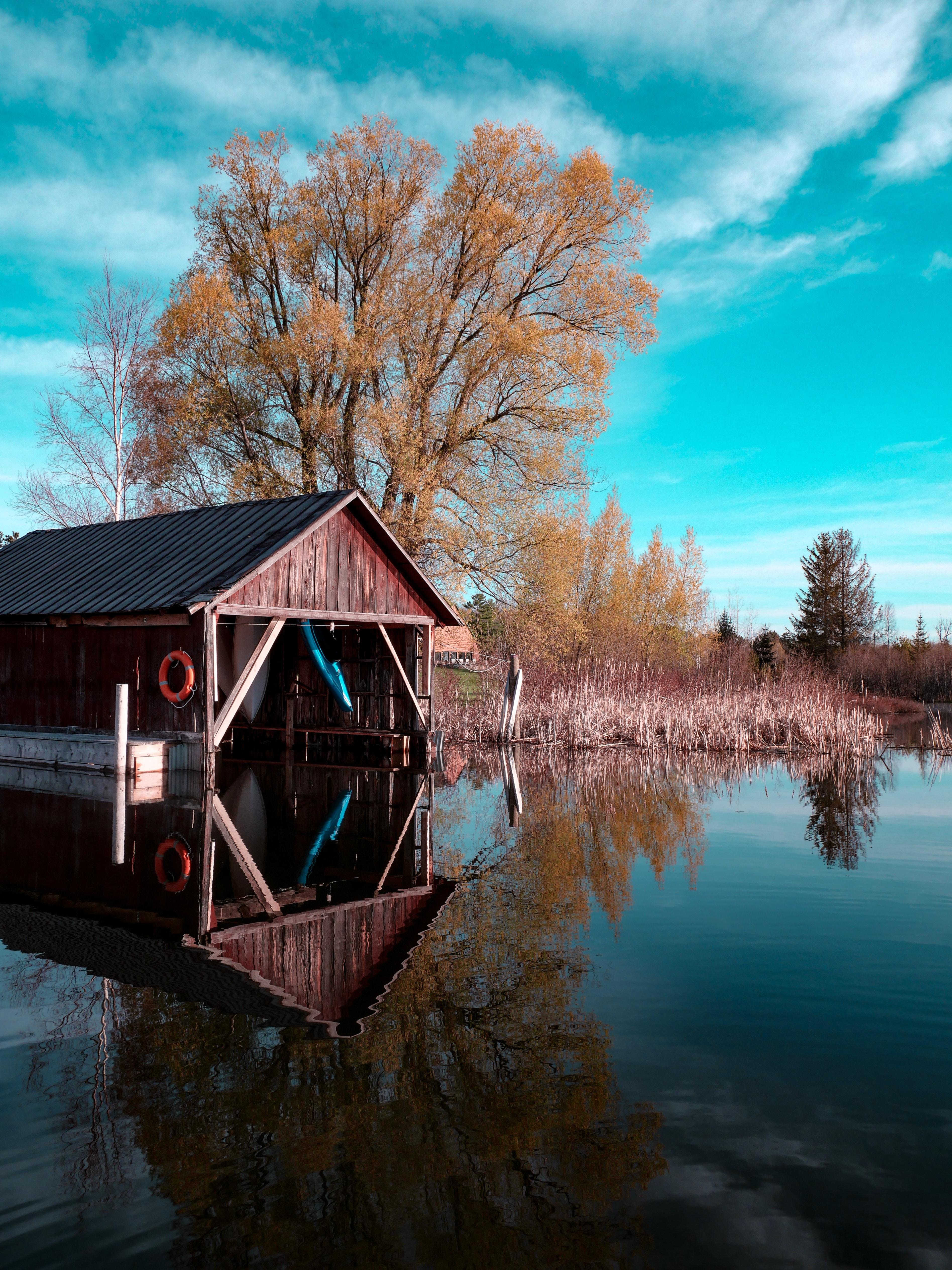 brown wooden dock near green leafed tree