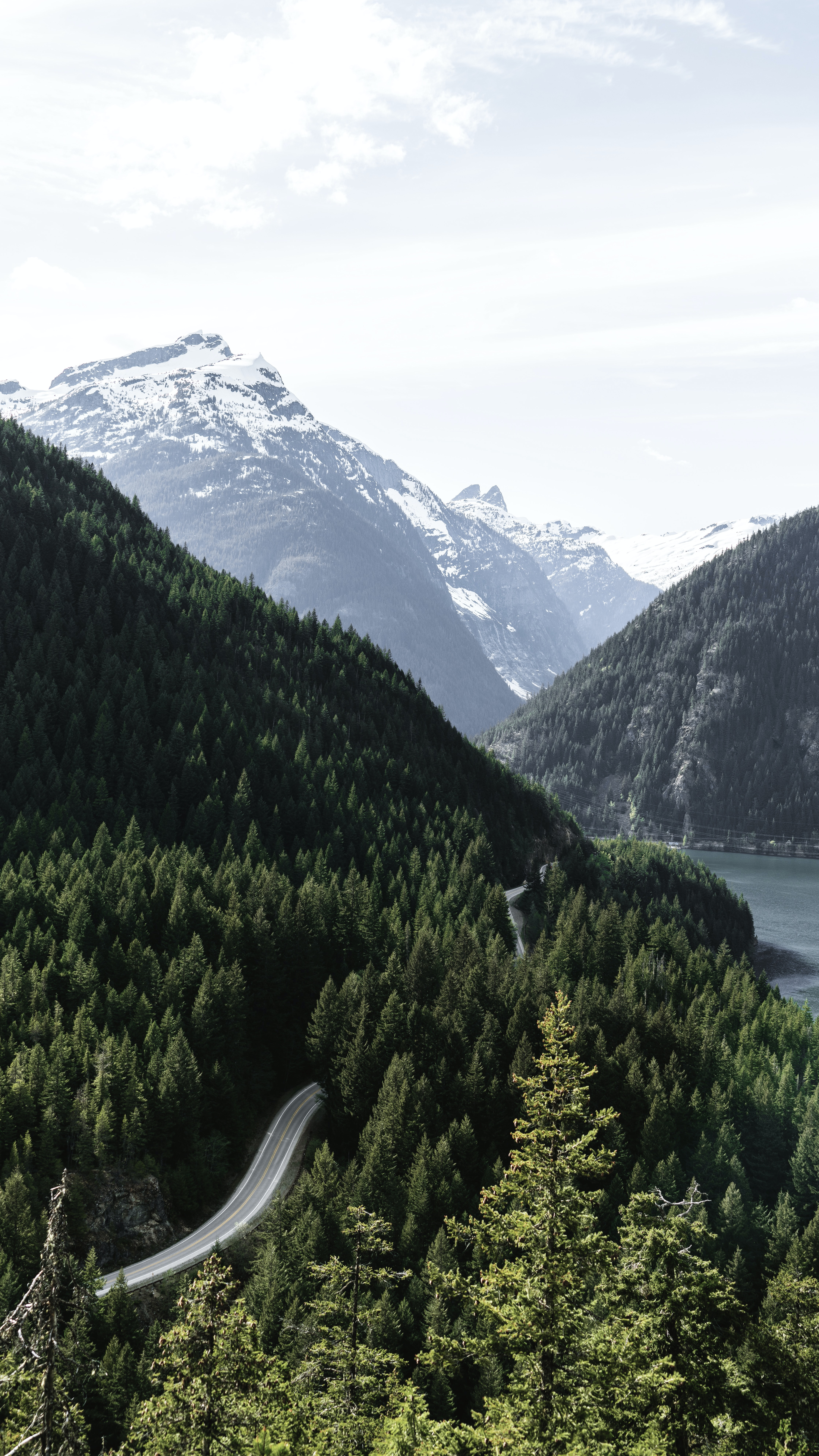 asphalt road between trees near mountain