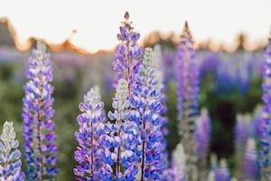 3877. Virágok