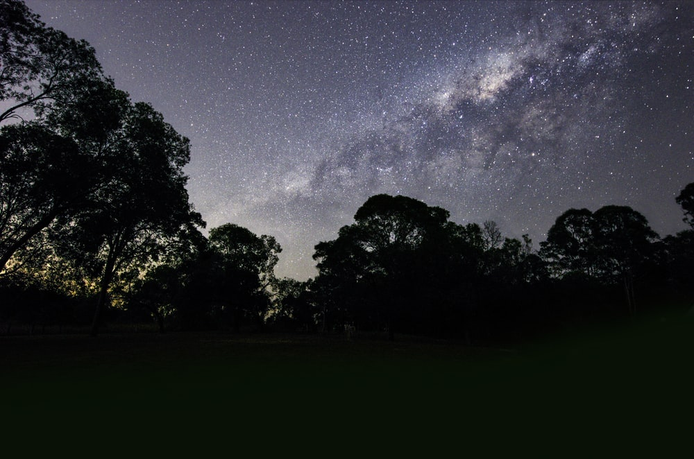 silhouette of trees under gray sky at nighttime