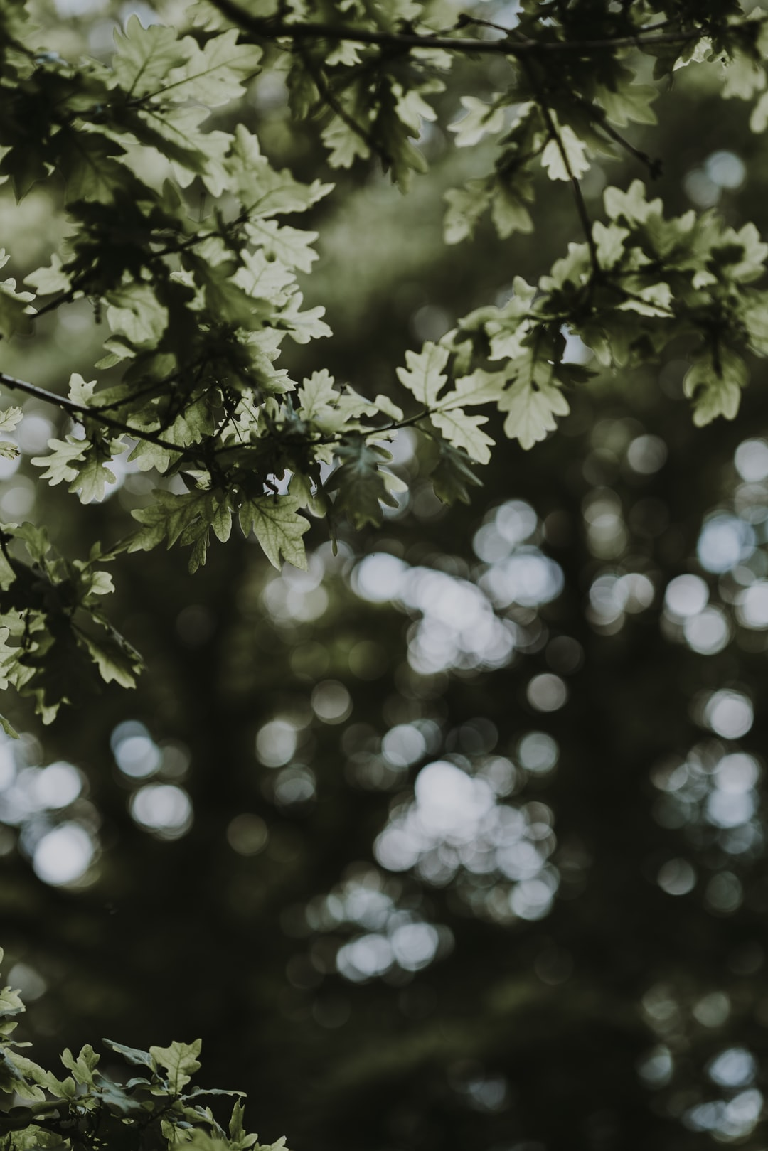 Light behind leaves creating bokeh effect