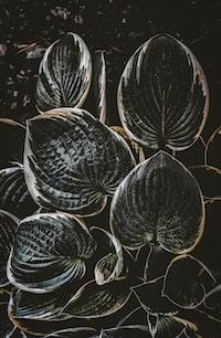 black plant
