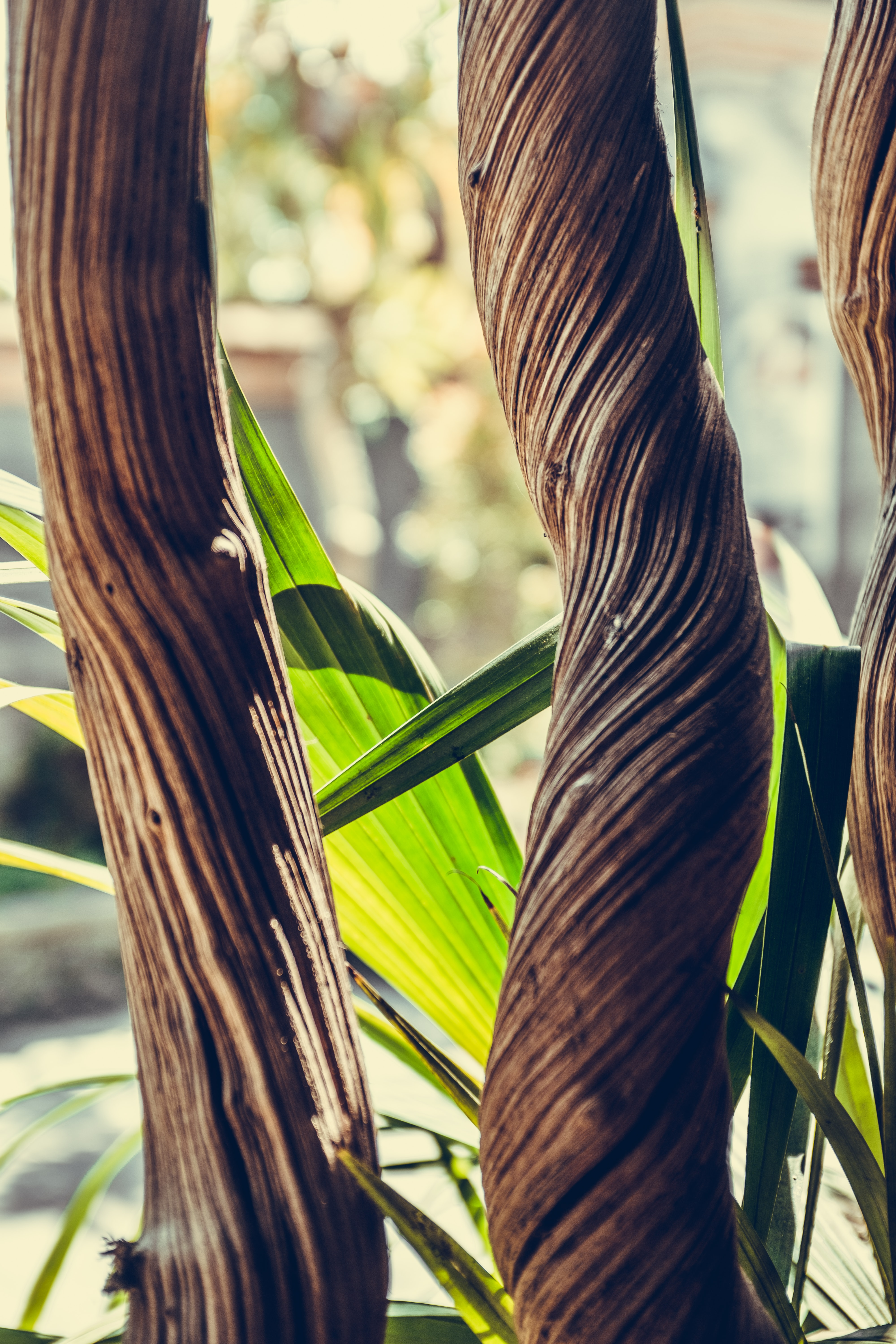 shallow focus photography of brown wooden plant