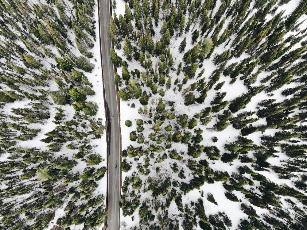 aerial photography of road and snow covered trees