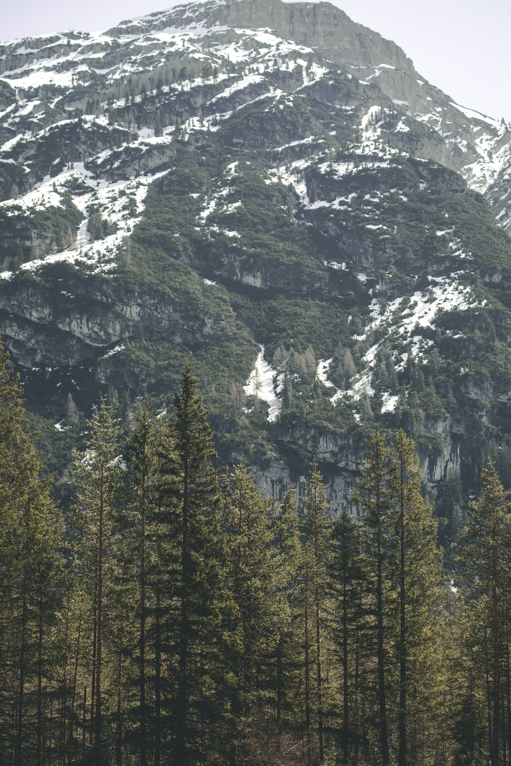 tall trees near mountain during daytime