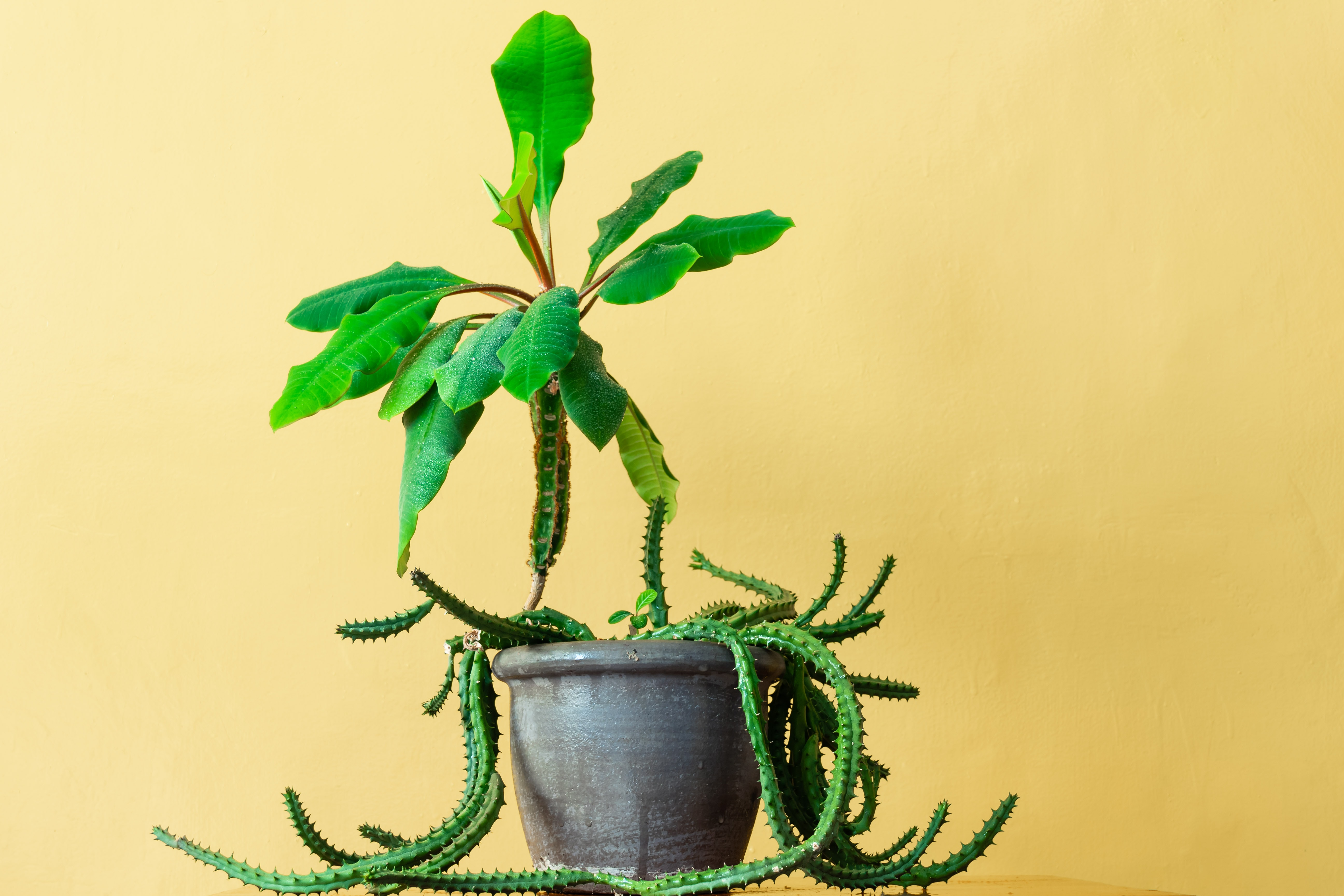 green leafed plant with round brown pot