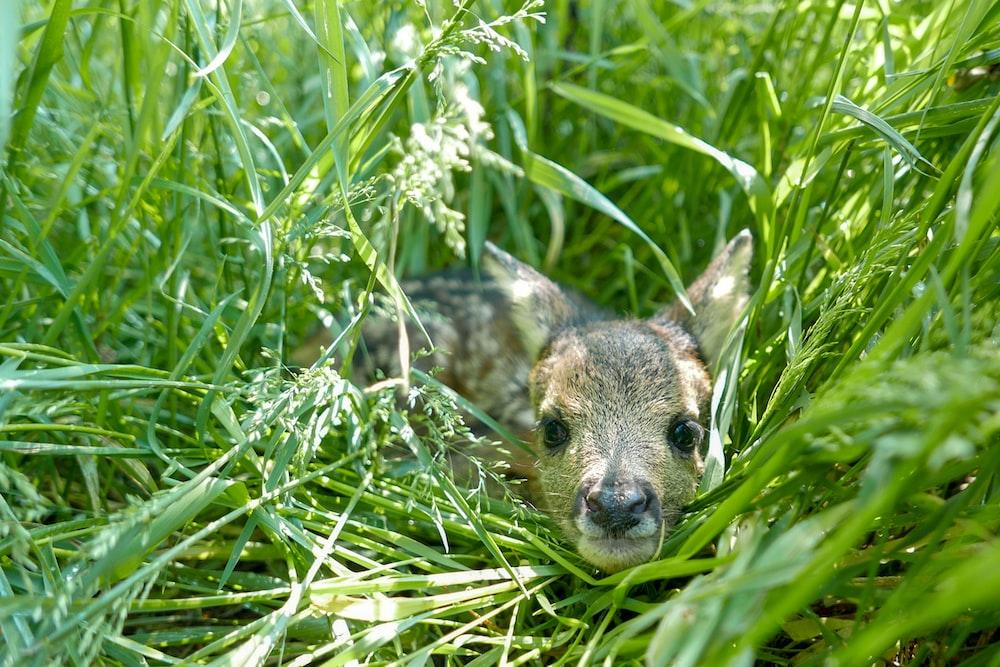 brown deer on grass