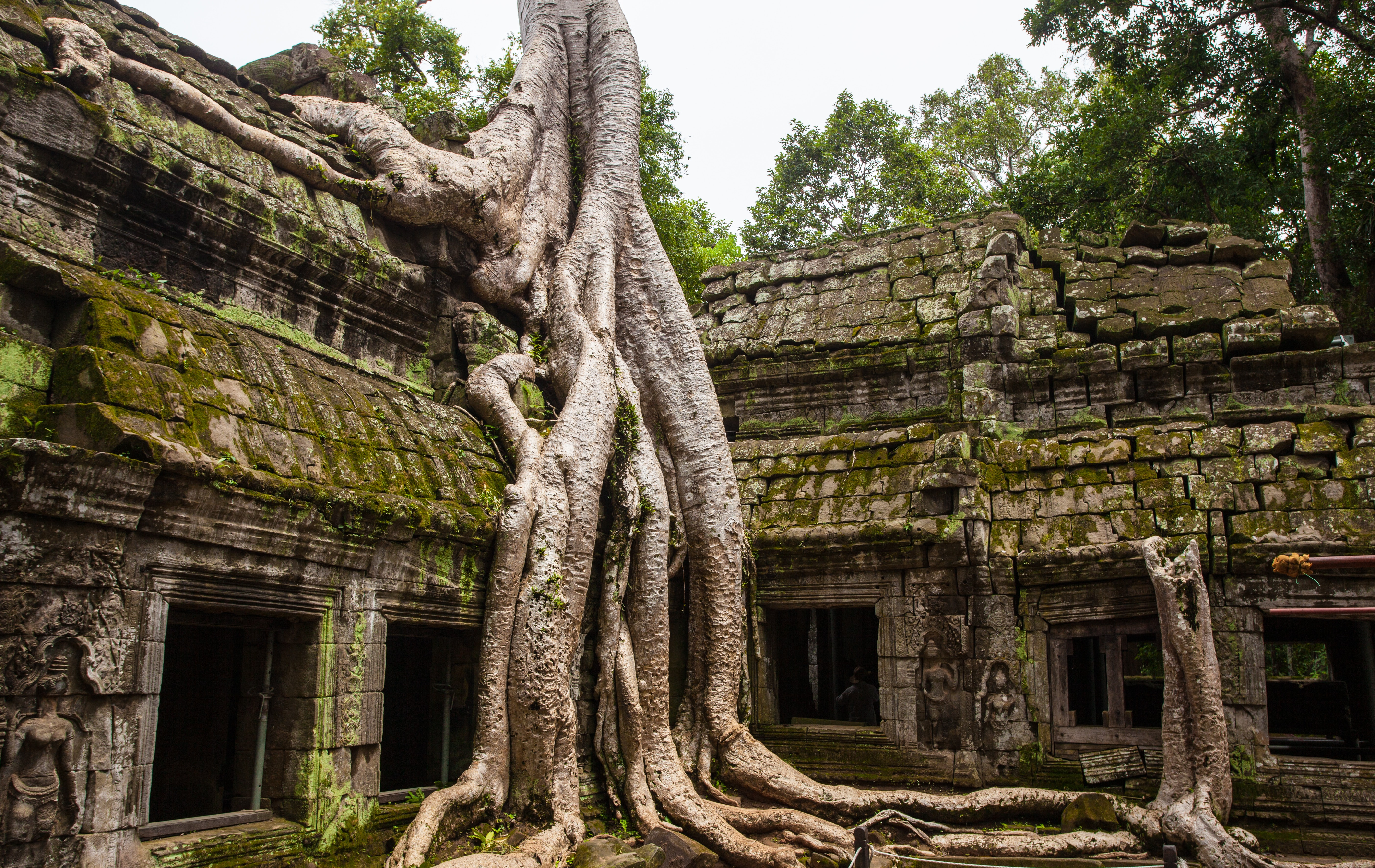 concrete temple with tree root on top