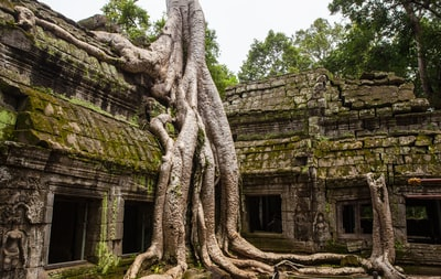 concrete temple with tree root on top cambodia zoom background