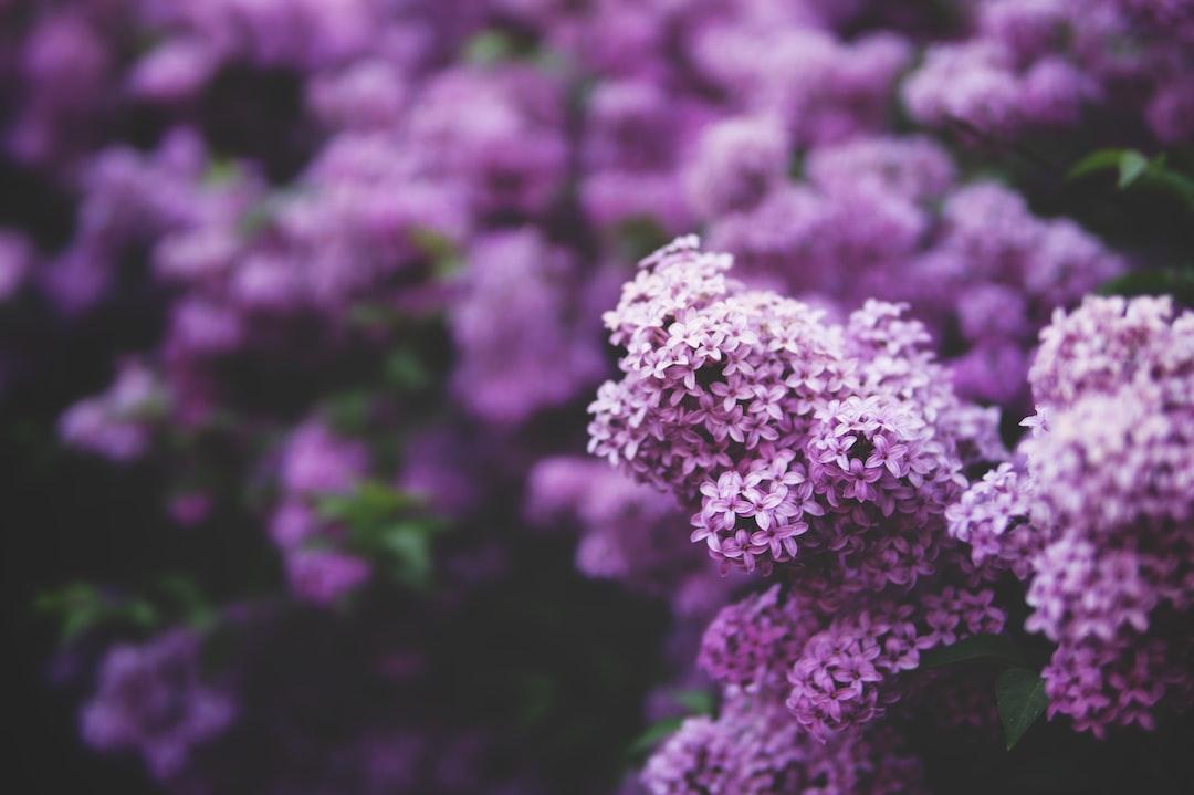 DIY Perfume from Fresh Flowers