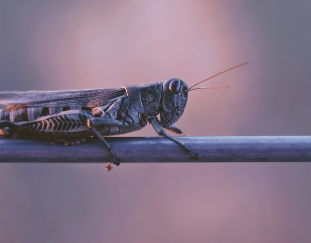 shallow focus photography of grasshopper