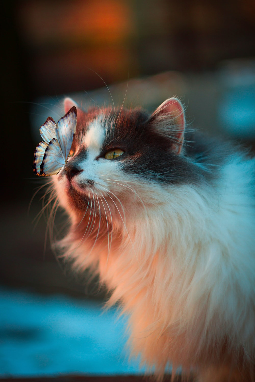 فراشة بيضاء تستريح على أنف القط