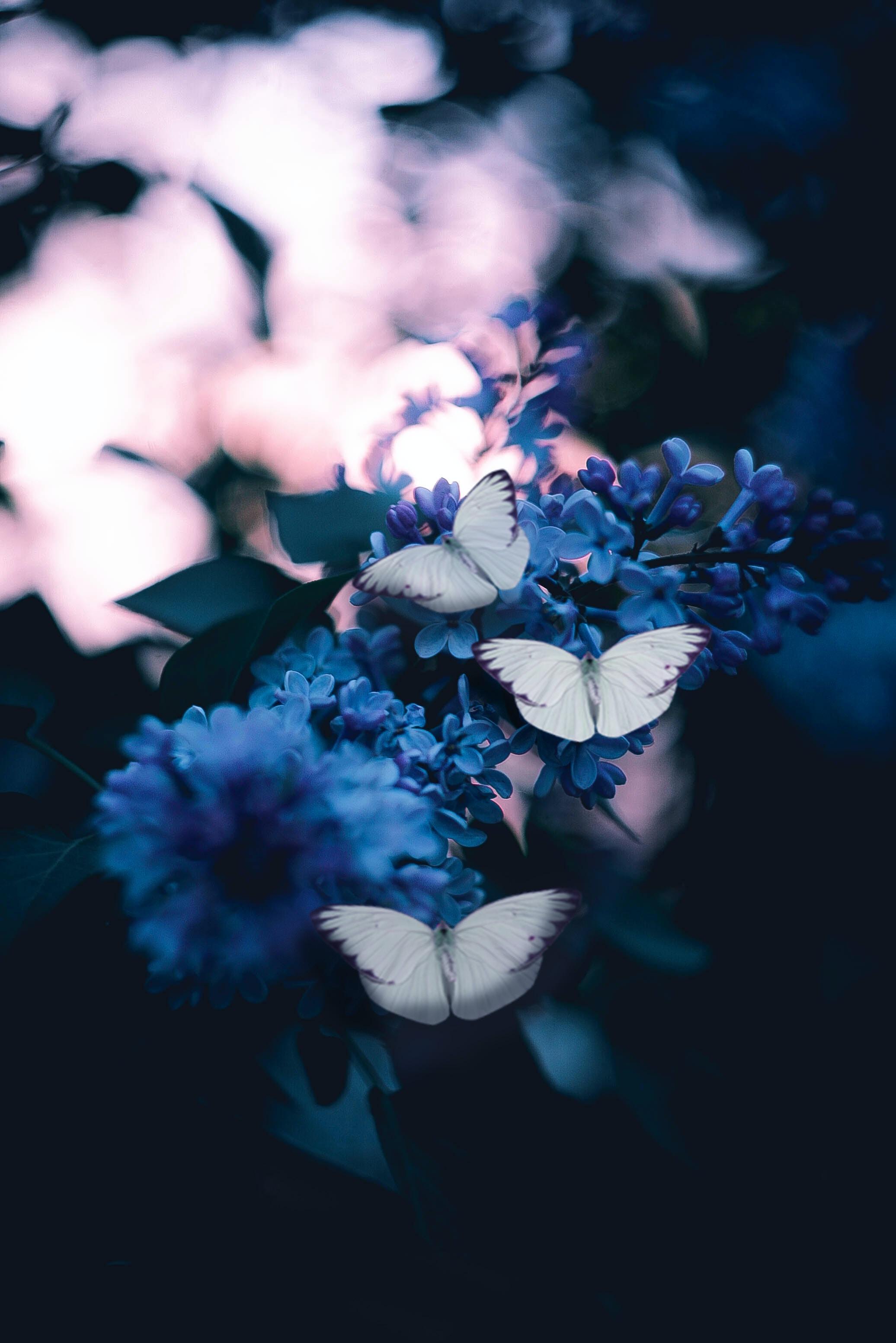 Strange Butterfly Creatures garden stories