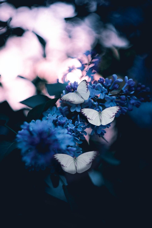 Butterfly Wallpapers Free Hd Download 500 Hq Unsplash