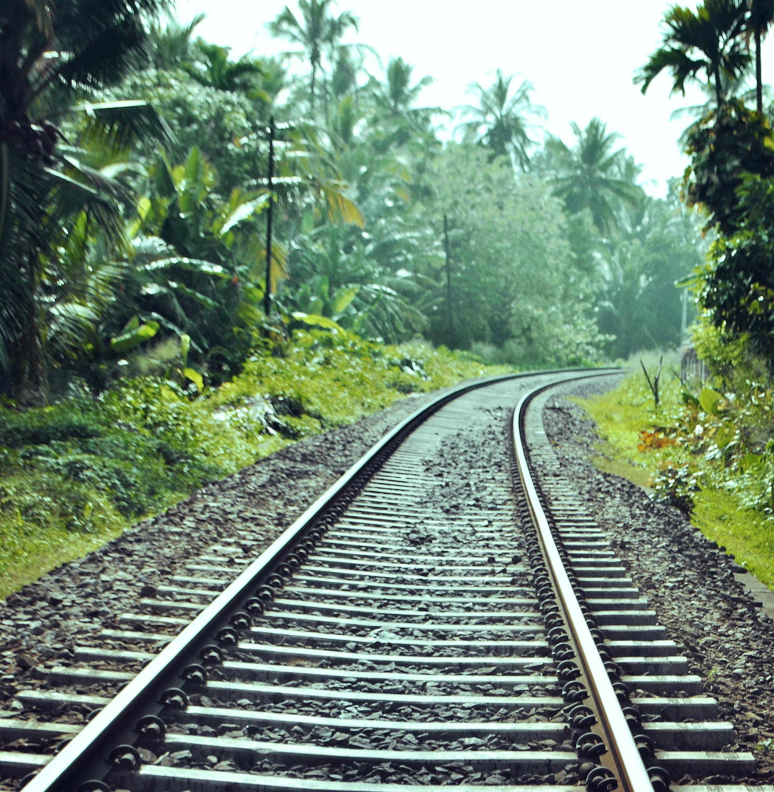 train railway between trees