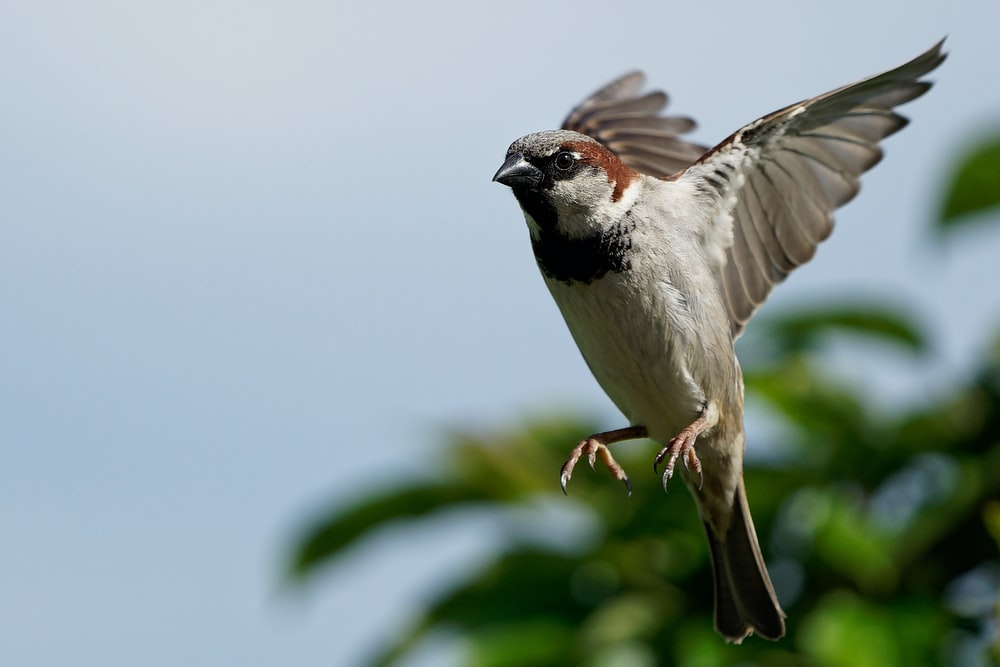 selective focus wildlife photography of grey bird