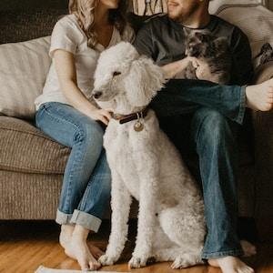 couple sitting on sofa beside dog inside room