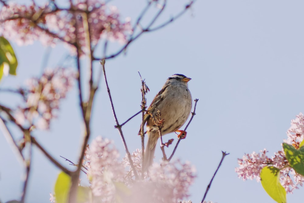 bird perched on tree brumch