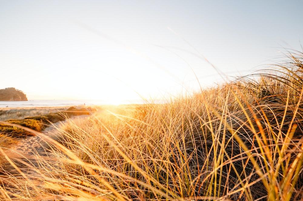 photograph of grass field near beach