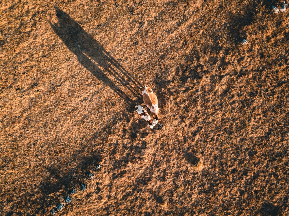 bird's-eye view photography of person