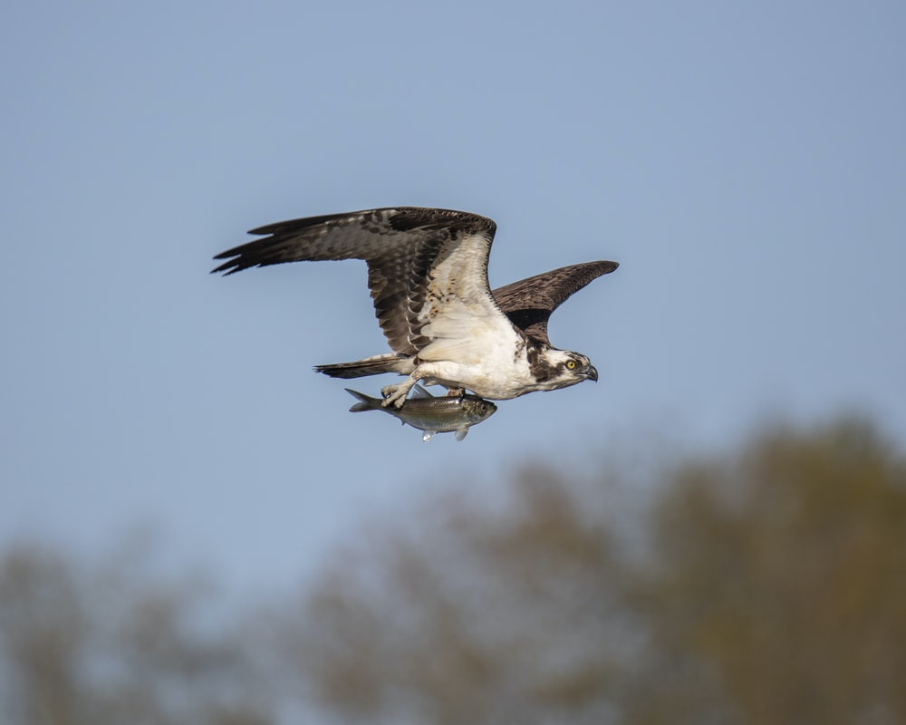 shallow focus photography of white and gray hawk