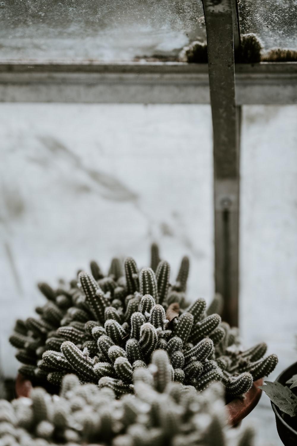selective focus photography of cactus plants near window