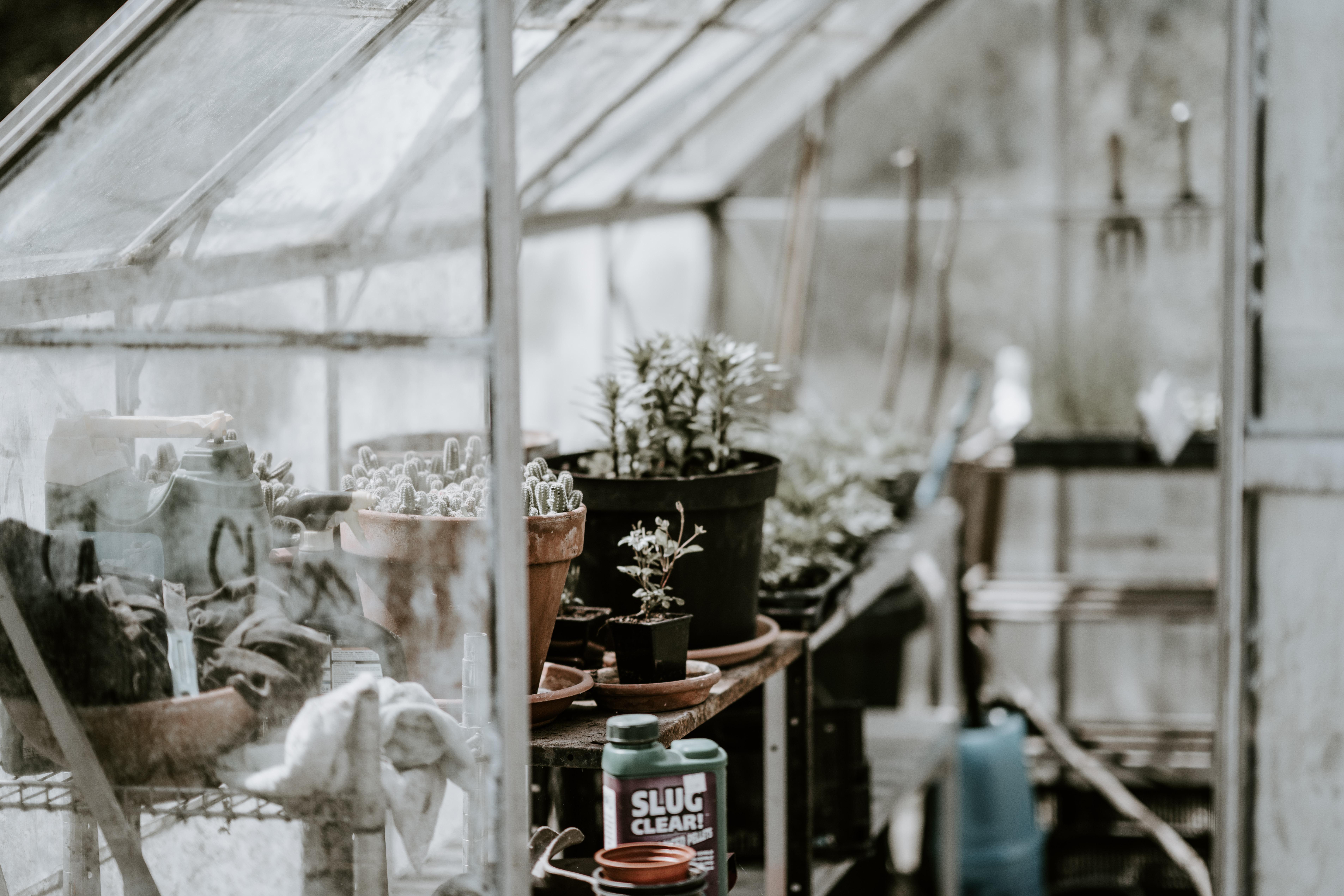 closeup photo plants