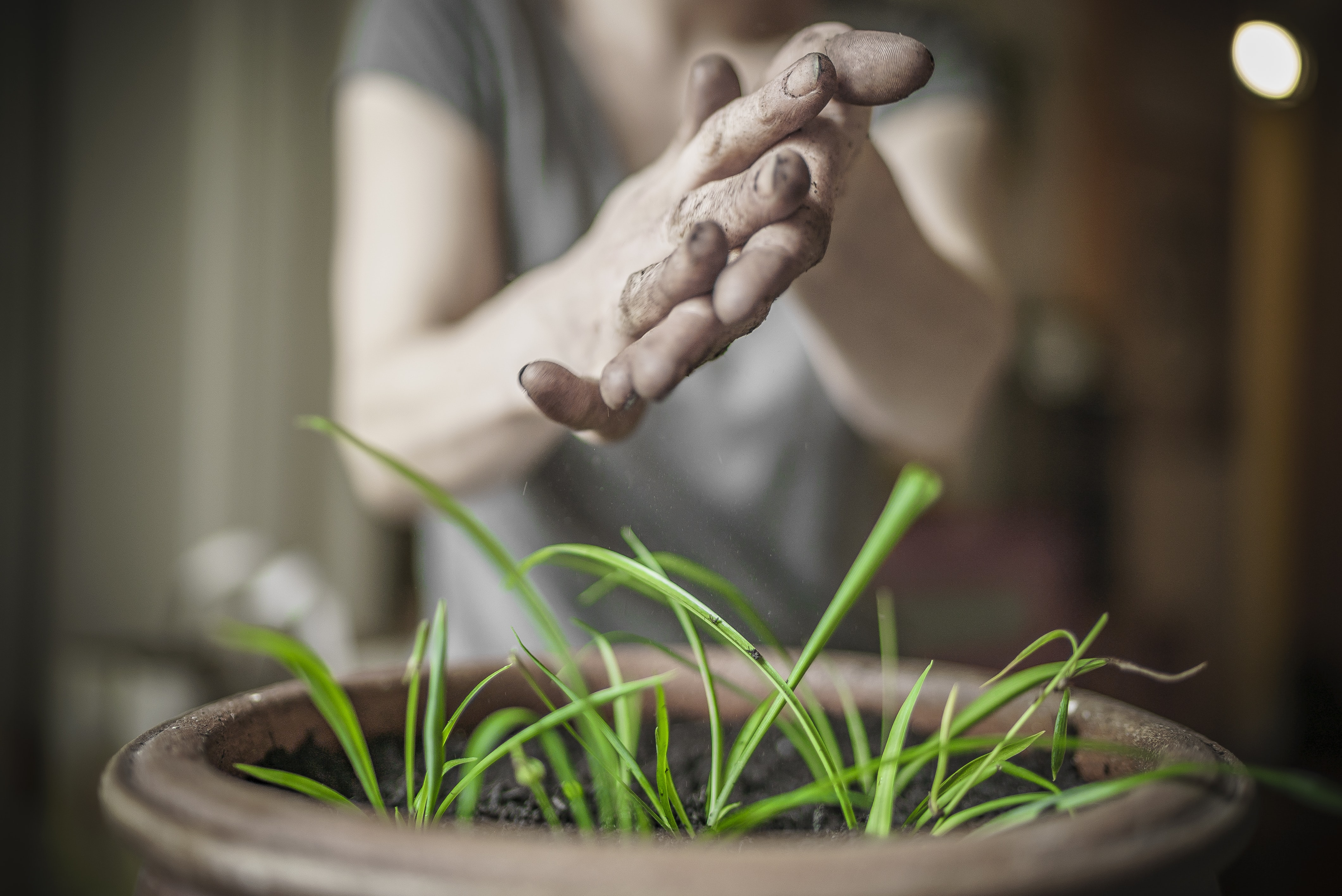 person's hands over green leafed plant